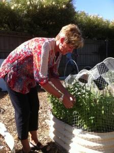 Melissa using our photo opp as a basil picking opp! She loves it!
